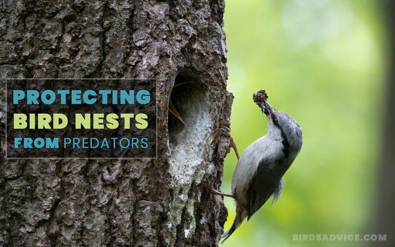 Protecting Bird Nests from Predators