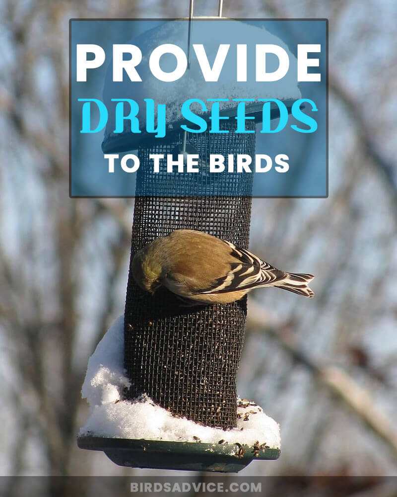Provide Dry Seeds to the Birds