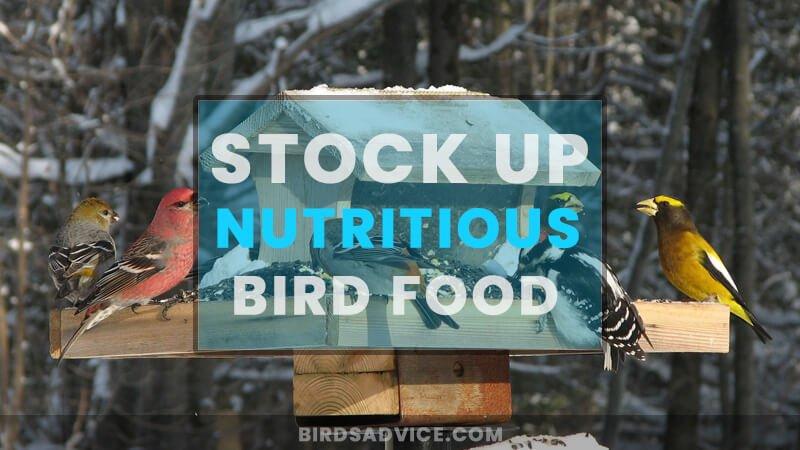 Stock up Nutritious Bird Food