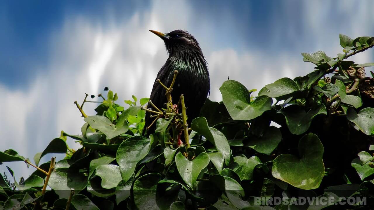 Where Do Birds Go At Night? A Clear Overview | Birds Advice