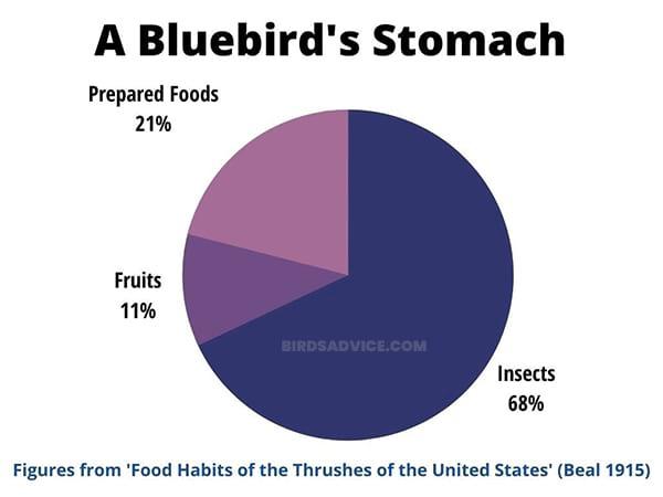 A Bluebird Stomach