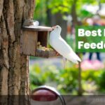 7 Best Pigeon Feeders In 2021 | Complete Buyer's Guide