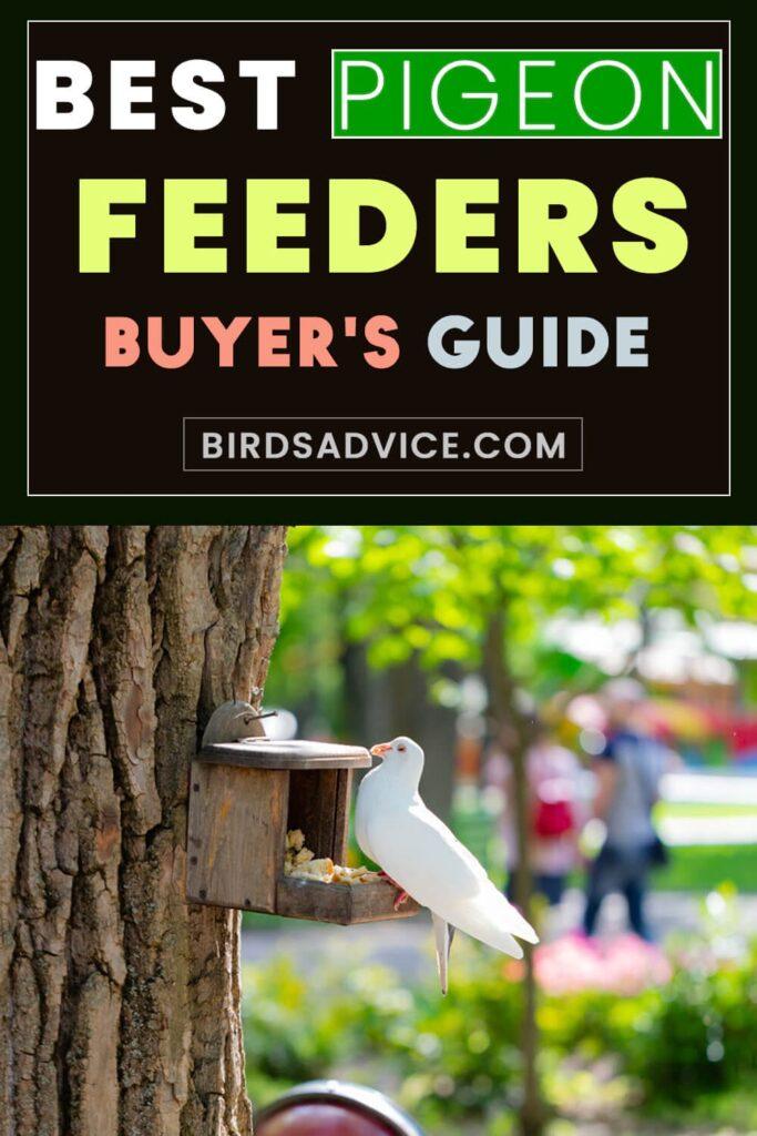Best Pigeon Feeders | Birds Advice Infography