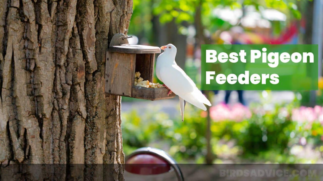 7 Best Pigeon Feeders In 2021 | Complete Buyer's Guide