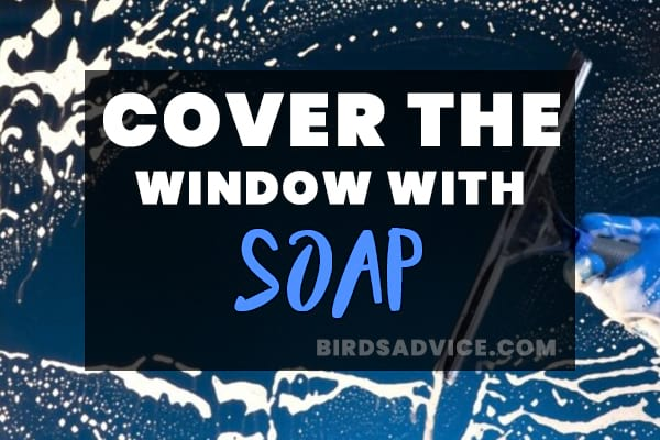 Cover the Window with Soap