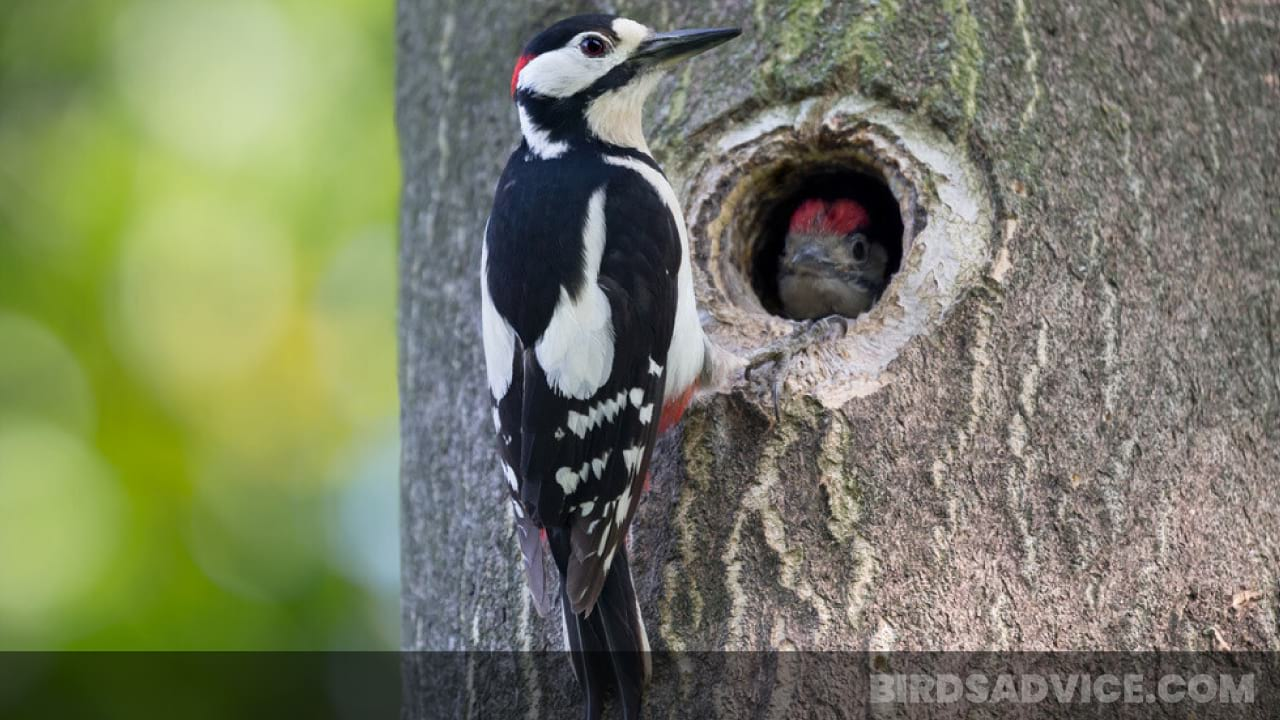 How To Get Rid Of Woodpeckers Pecking Your House