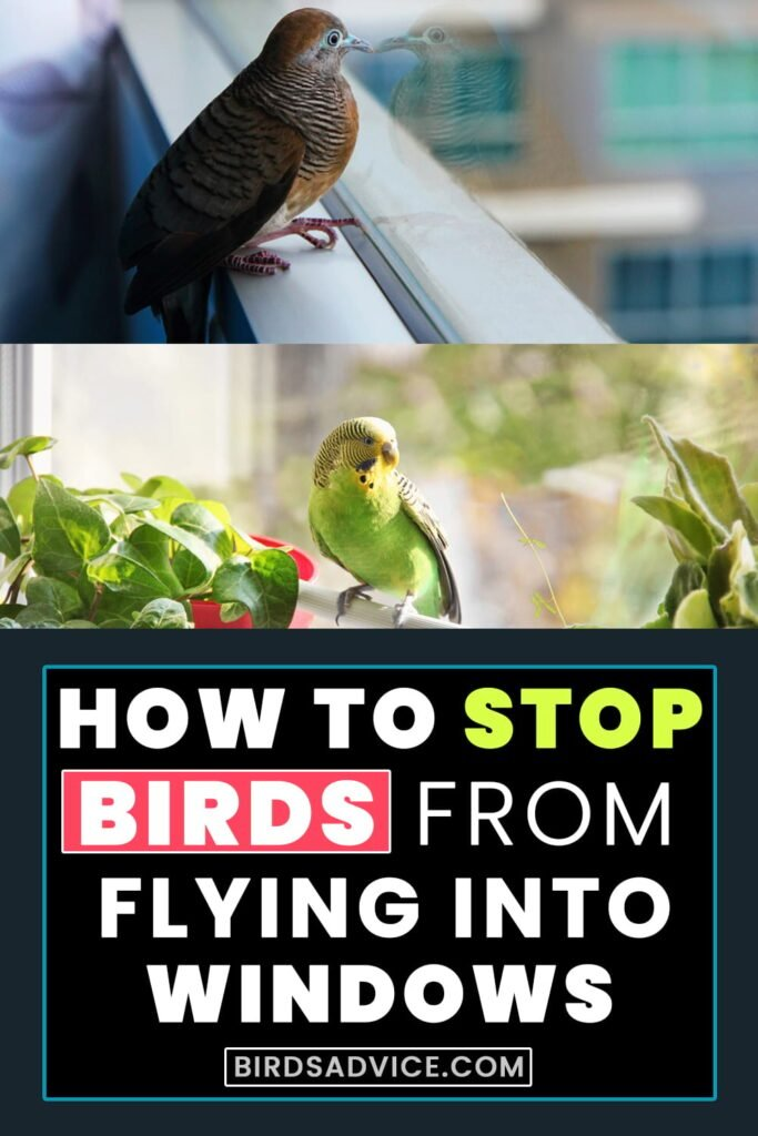 How To Stop Birds From Flying Into Windows? Infographic