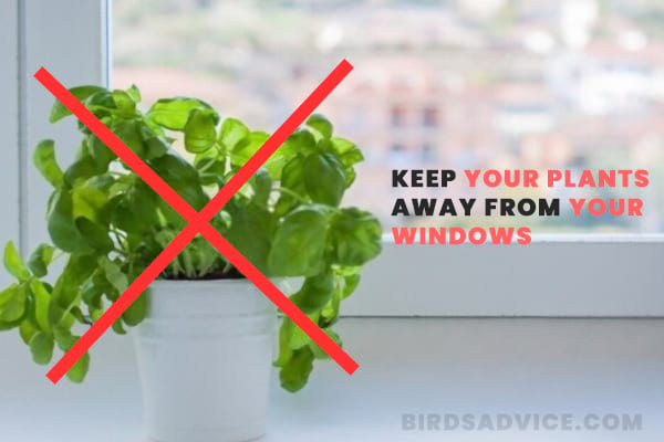 Keep Your Plants Away from Your Windows
