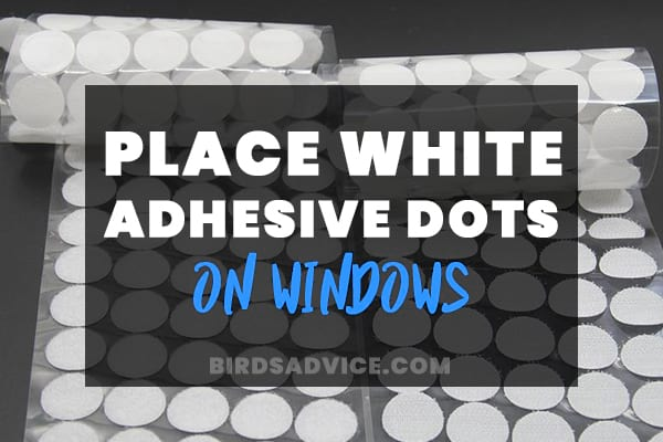 Place White Adhesive Dots on Windows