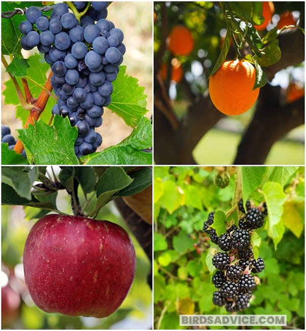 Plant Different Types Of Fruit Trees
