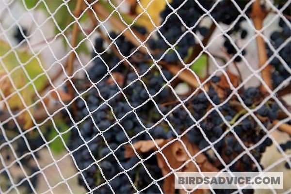 Use A Woodpecker Net