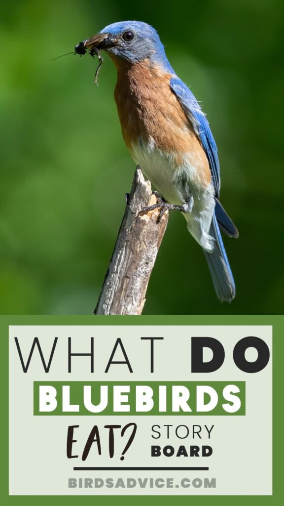 What Do Bluebirds Eat? Story PIn