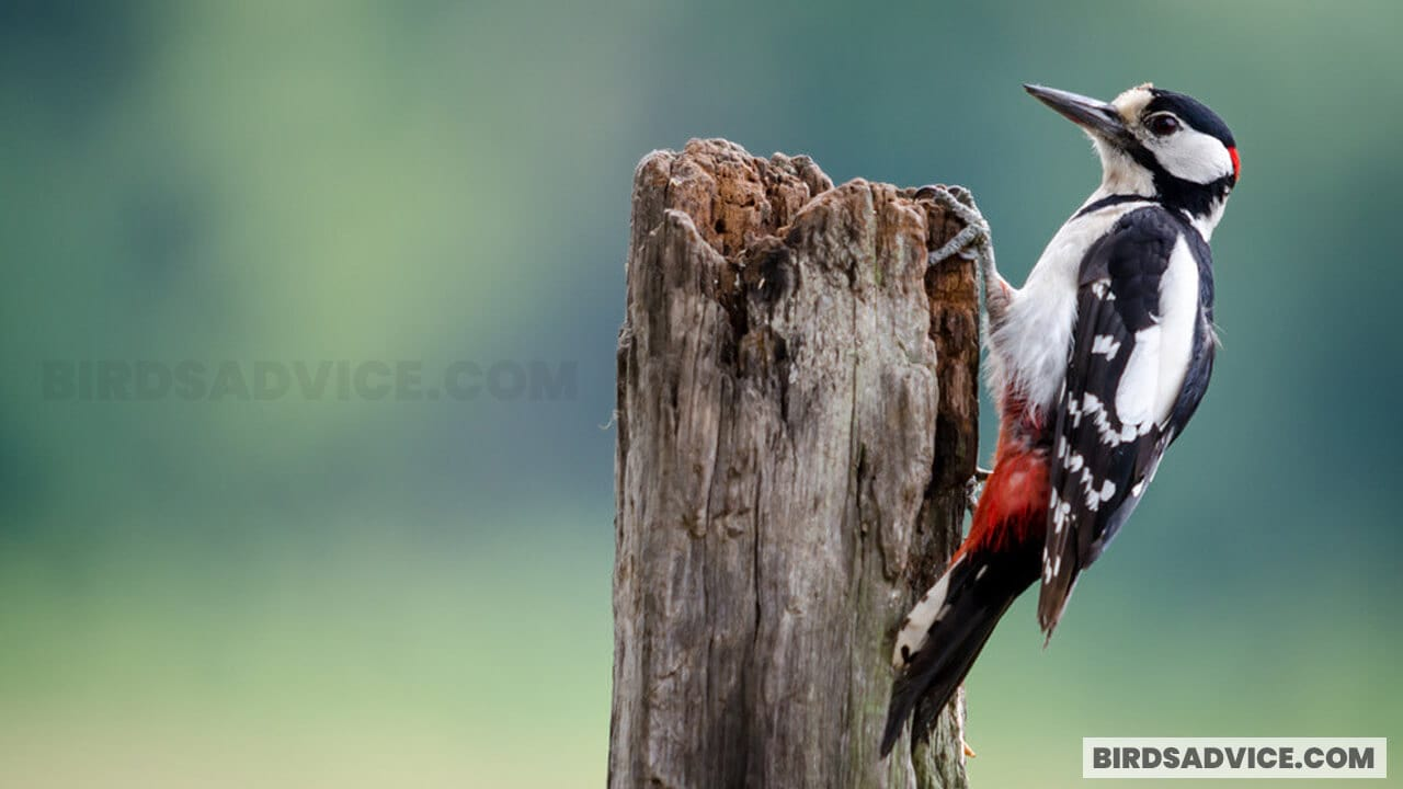 How To Attract Woodpeckers To Your Yard | Top 10 Best Tips