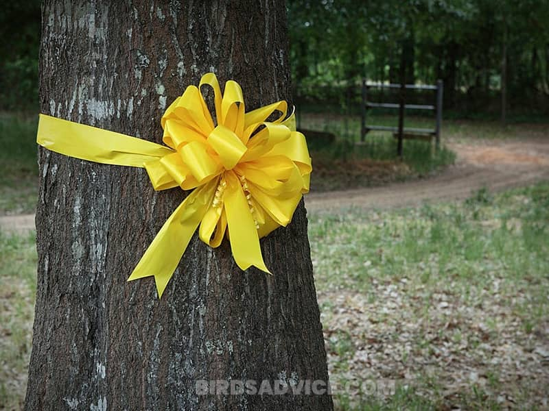 Add bright colored ribbons to your backyard