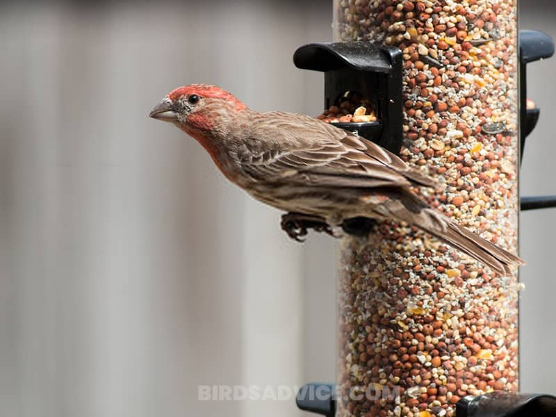 Add finch specific feeders