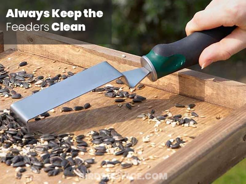 Always keep the feeder clean