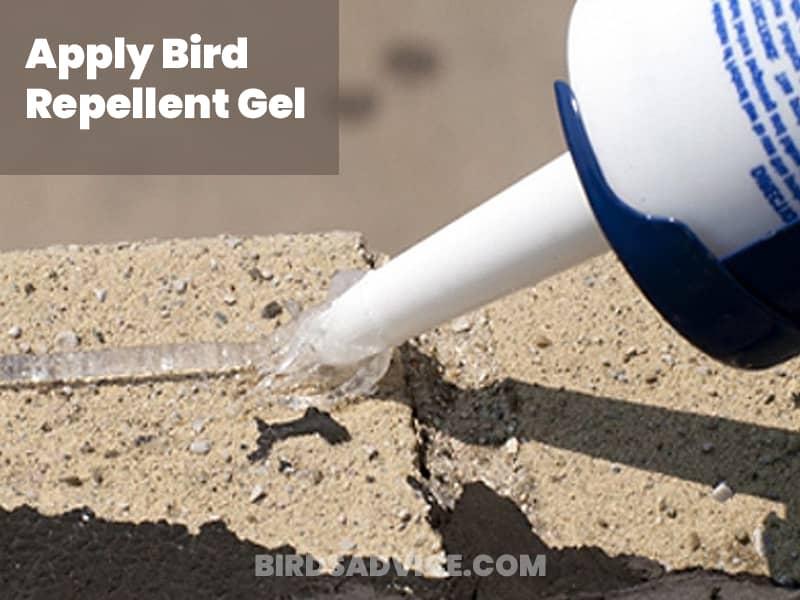 Apply bird repellent gel