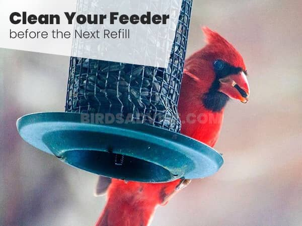 Clean Your Feeder before the Next Refill