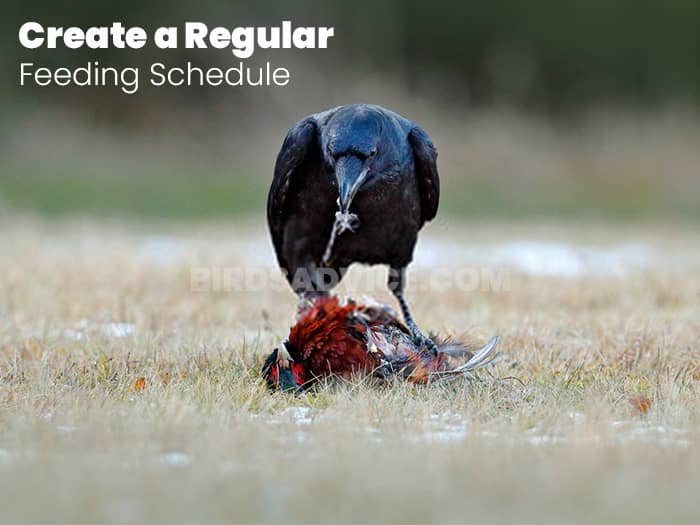 Create a Regular Feeding Schedule