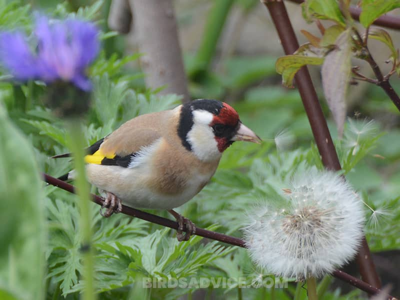 Encourage nesting in your yard