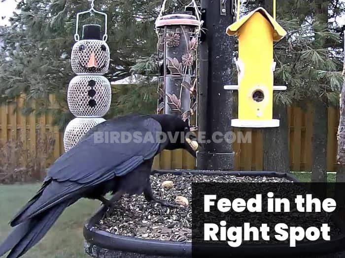 Feed in the Right Spot
