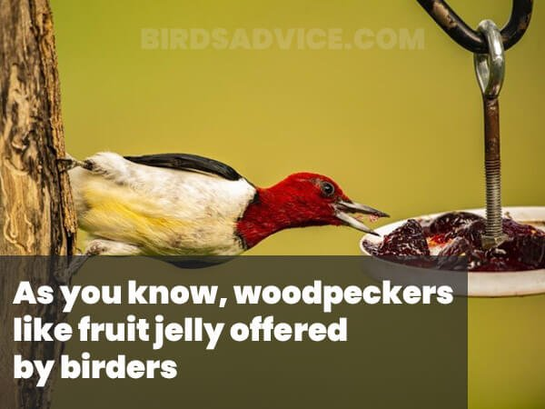 Fruit Jelly For Woodpeckers