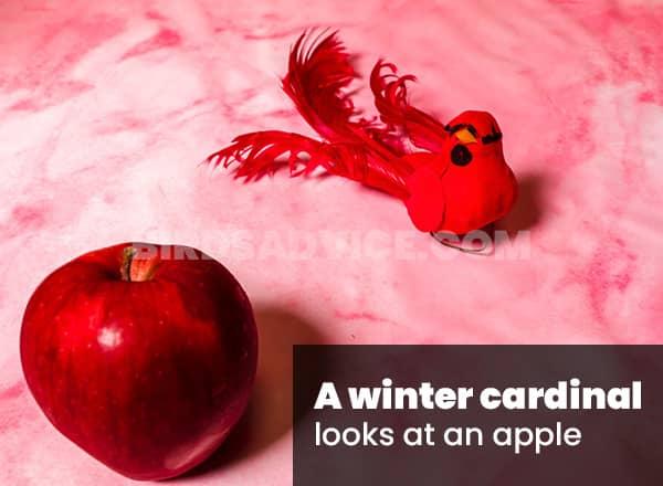 Fruits for cardinals