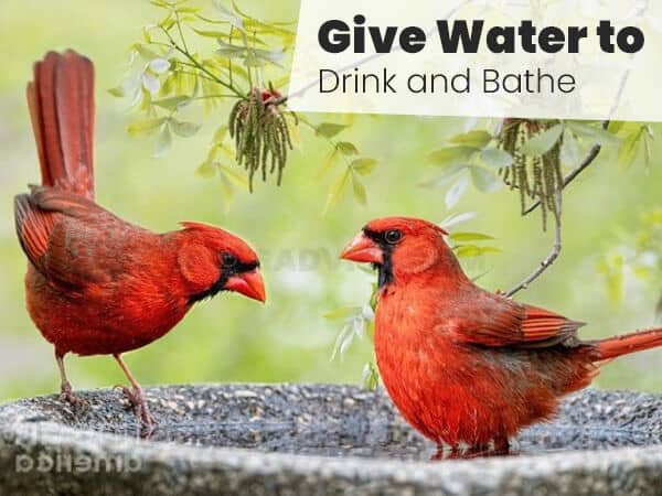 Give Water to Drink and Bathe