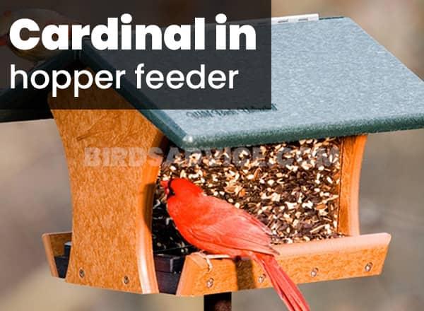 Hopper or tray feeder for cardinals
