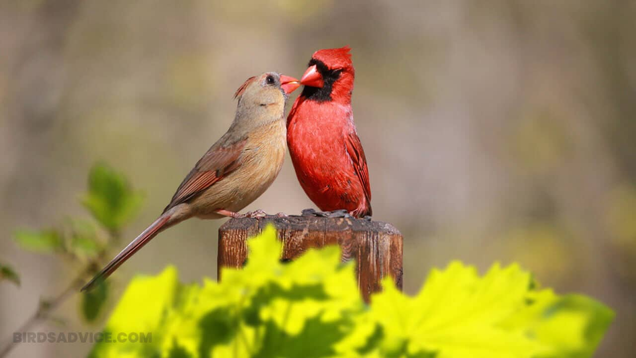How To Attract Cardinals To Your Yard In 12 Simple Methods