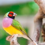 How To Attract Finches To Your Yard | 12 Helpful Tips