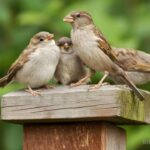 How To Attract Sparrows To Your Yard | 10 Best Tips