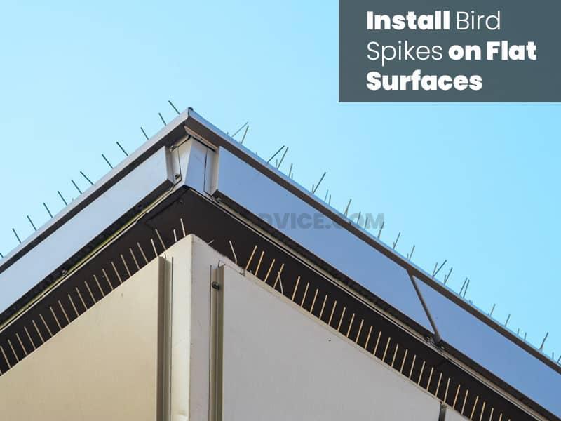 Install bird spikes on flat surface
