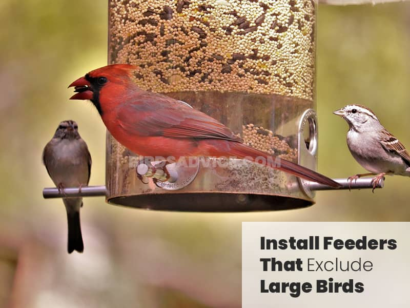 Install feeders that exclude large birds