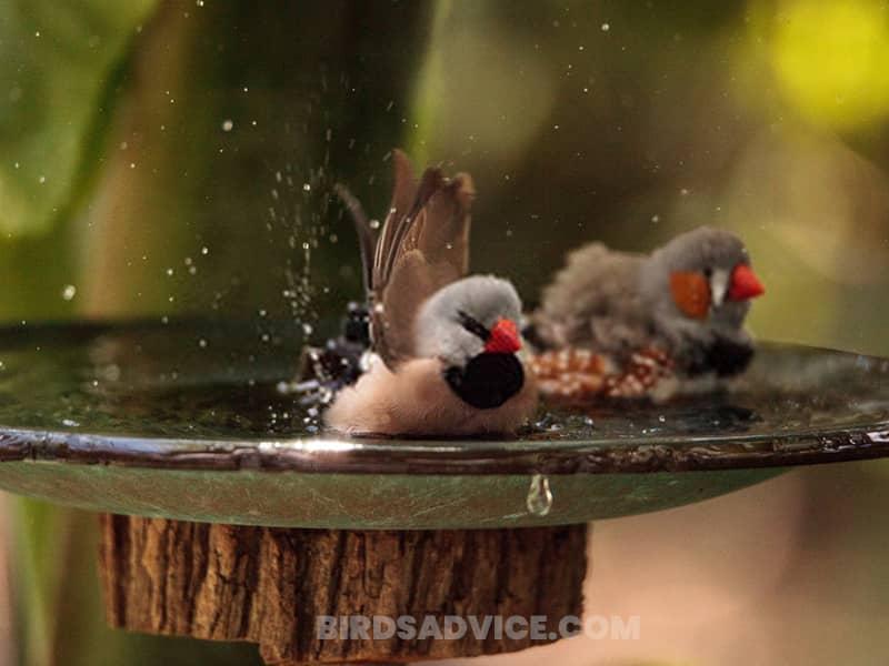 Install a birdbath