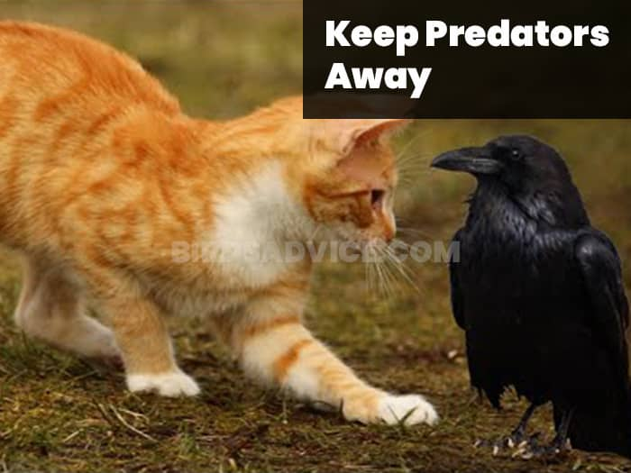 Keep Predators Away