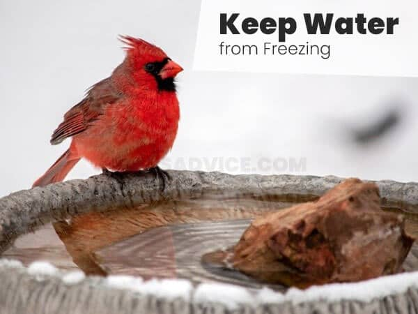 Keep Water from Freezing