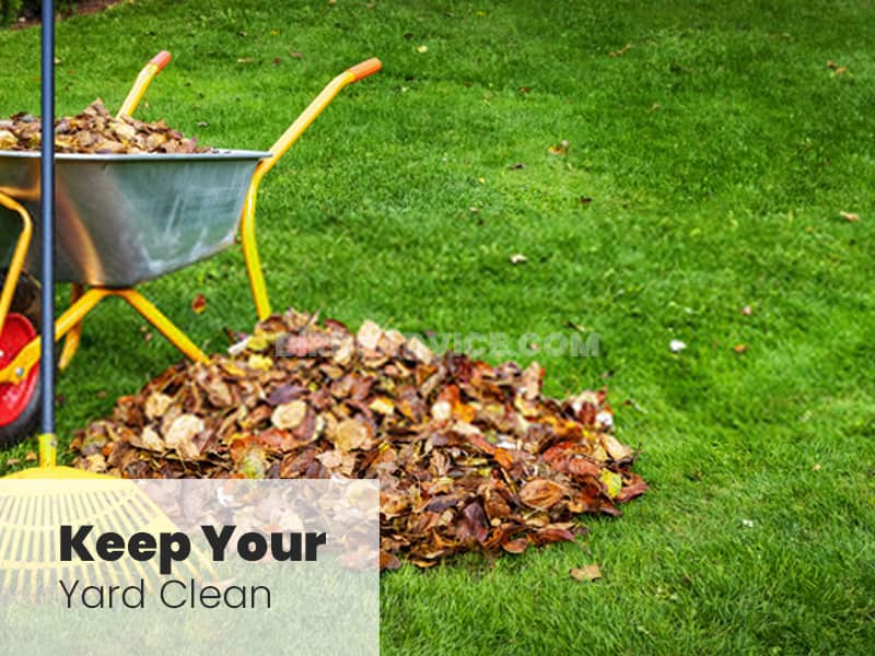 Keep your yard clean