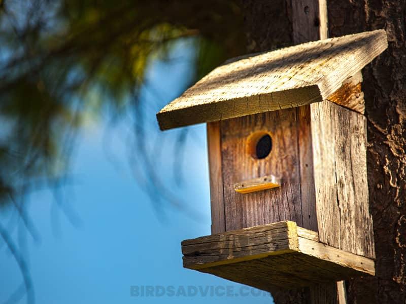 Mount nesting boxes