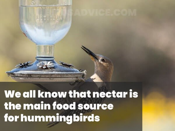 Nectar For Woodpeckers