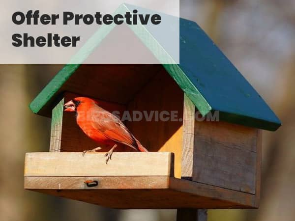 Offer Protective Shelter