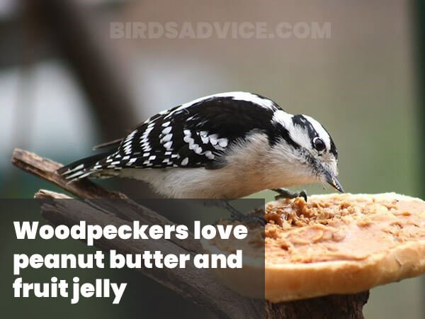 Peanut Butter For Woodpackers