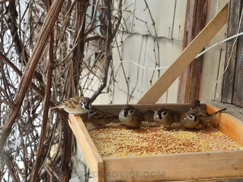 Place the feeders in the right spot