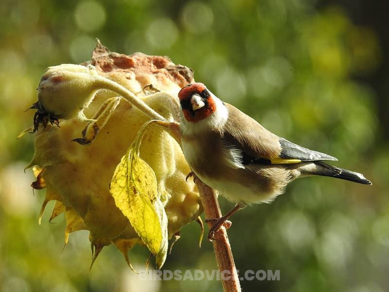 Plant natural vegetation