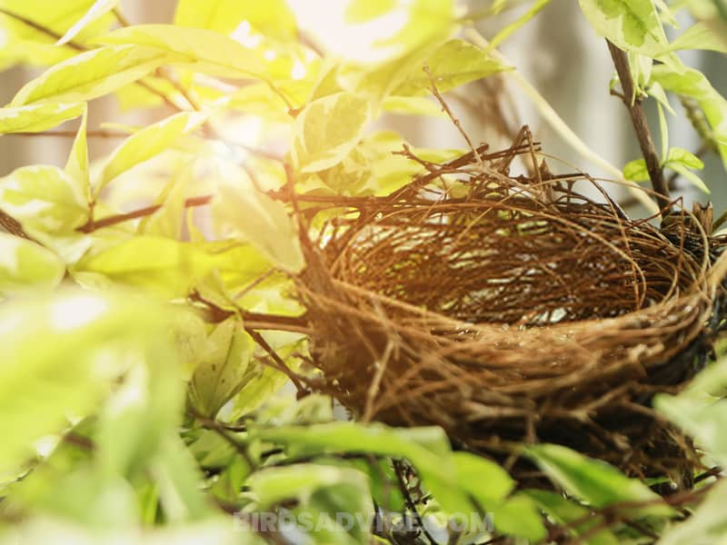 Provide nesting materials