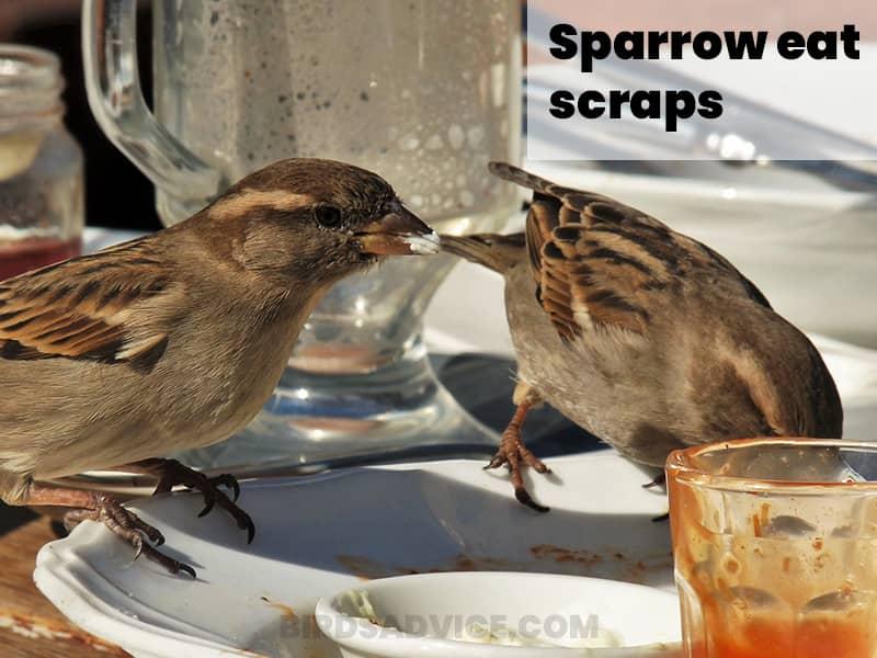 Scraps food