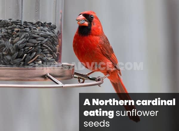 Seeds for cardinals