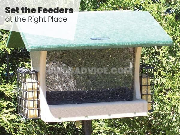 Set the Feeders at the Right Place