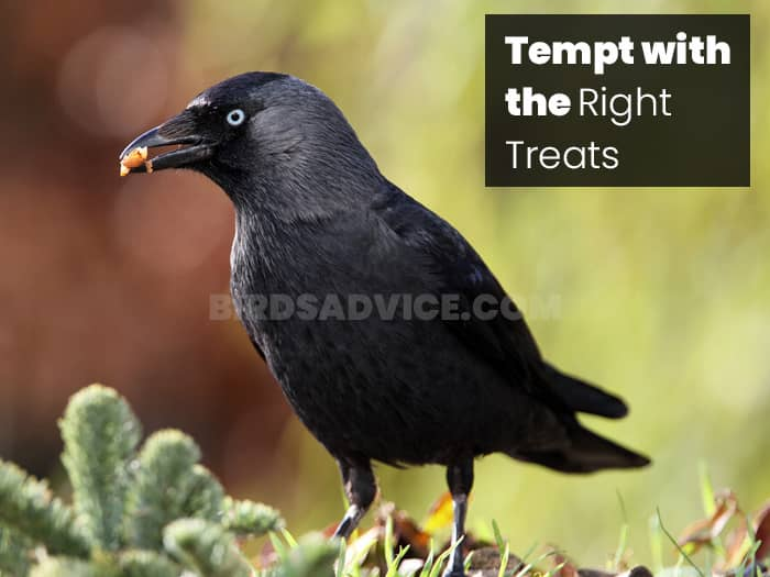 Tempt with the Right Treats