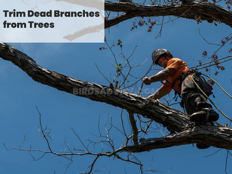 Trim dead branches from trees